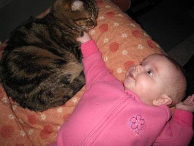 nice-kitty-112908