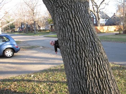 weird-baby-tree-112608