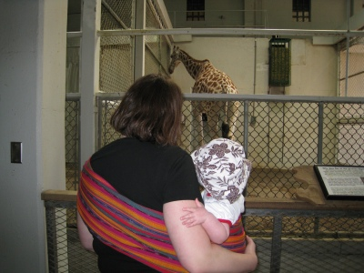 a-giraffes-butt