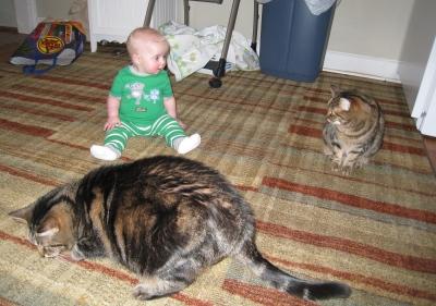 missed-you-kitties