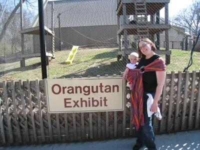 orangutan-exhibit
