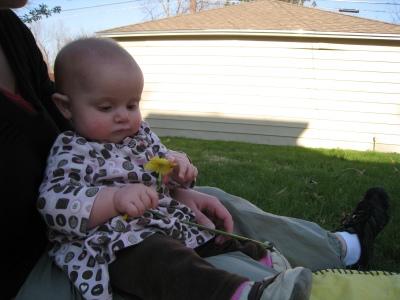 looking-at-daffodil