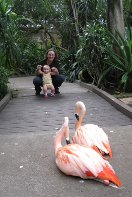 4x6 flamingos