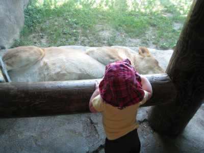 kivrin and the lion