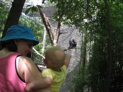 pointing to monkeys