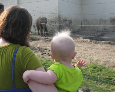 waving to the elephant