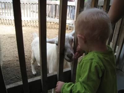 kivrin almost touching a goat