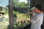 mountain lion licking the glass2